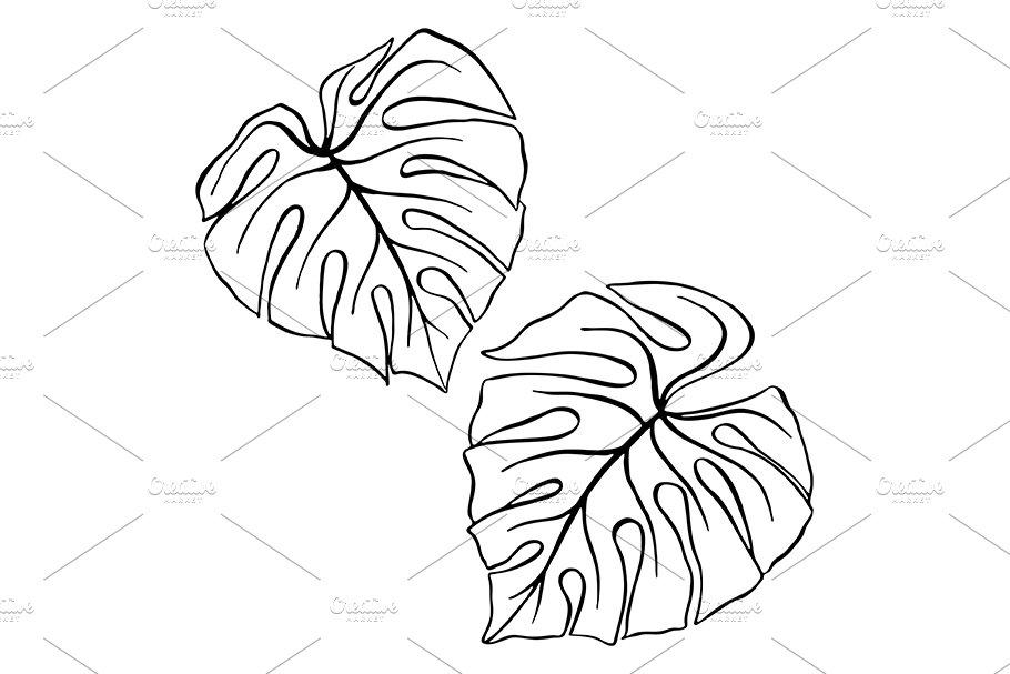 Monstera Tropical Leaf Plant Sketch Pre Designed Illustrator Graphics Creative Market Free and premium tropical leaf sketch images, vectors and psd mockups. monstera tropical leaf plant sketch