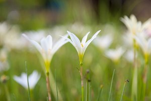 Small flower of grass
