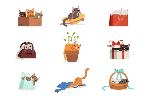 Cute differents cats having rest in…
