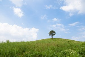 Single tree on a hill.