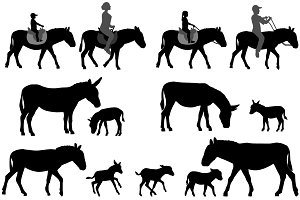 Silhouette of donkey and foal