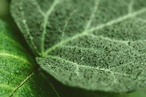 Macro photo of the wet green leaf.