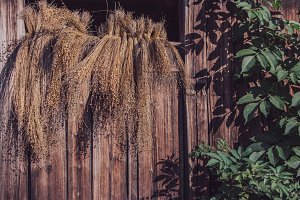 Dried grass on wooden aged wall