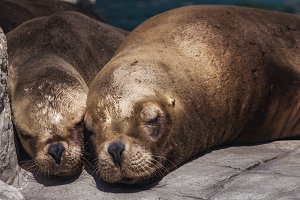 Two seals cuddle under the sun.