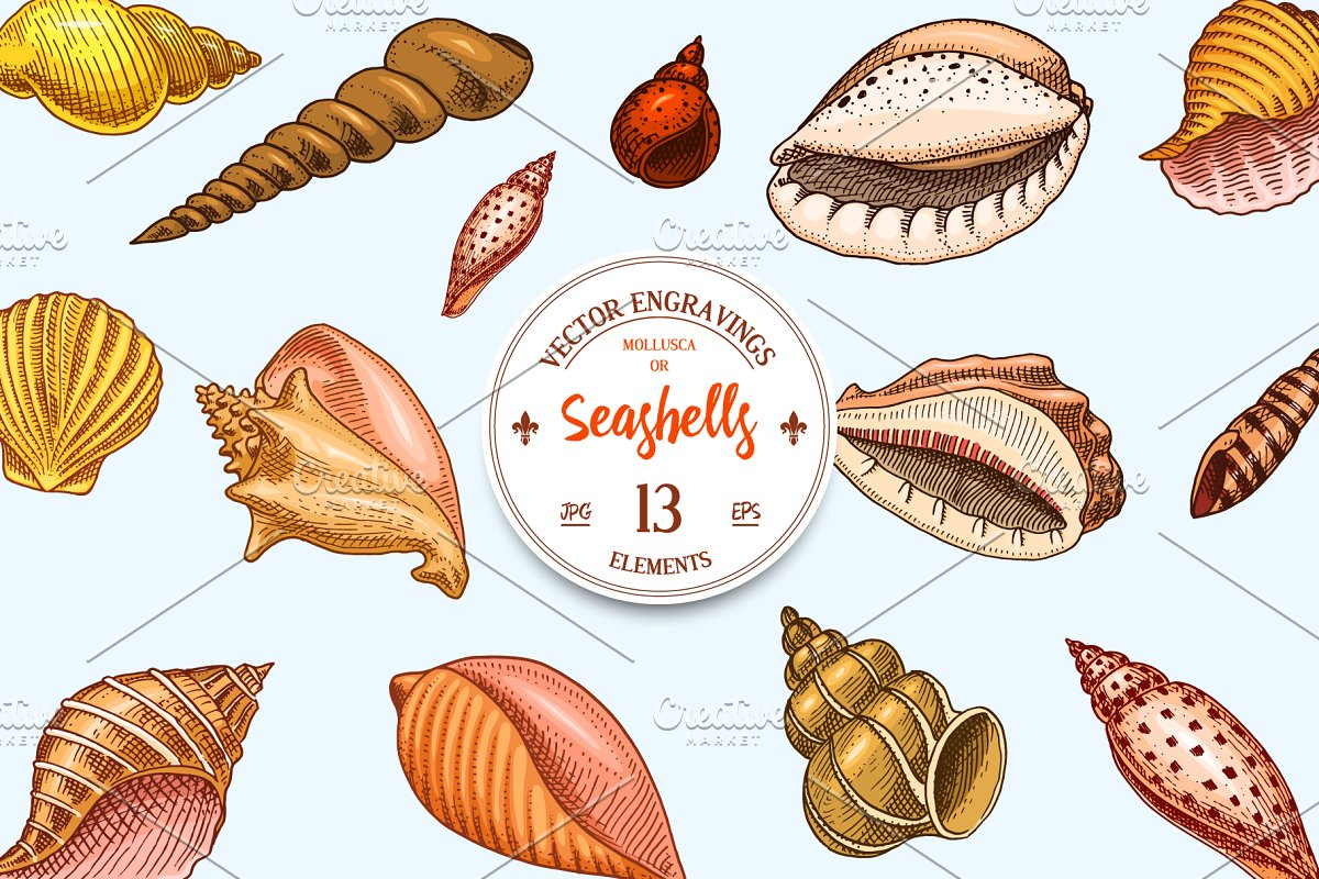 Seashells or Mollusca. Sea Creature.