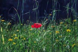 Floral natural background.