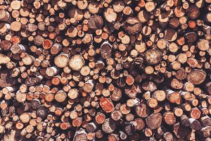 Wood logs texture