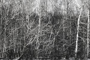 Branches of trees in winter forest.