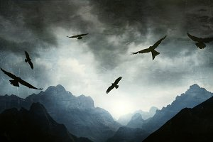 Landscape and Hawks in Backlight