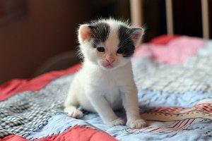 Kitten Gigi