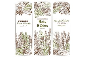 Herb and spice sketch banner of organic seasoning
