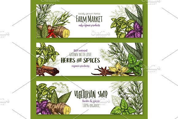 Vector sketch farm banners of spices and herbs