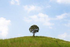 Single tree on a hill.