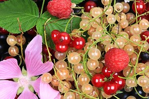 Fresh berries and flowers. Summer background