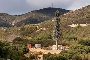 Cellphone mobile transmission tower disguised as a fir tree in California