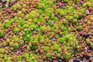 Green natural pattern with succulent