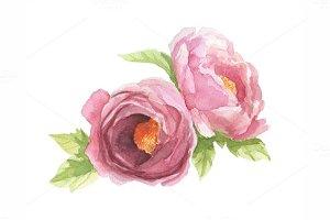 Watecolor pink peonies
