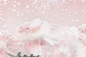 Pastel pink peonies background