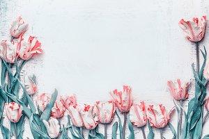 Pastel pink tulips , springtime