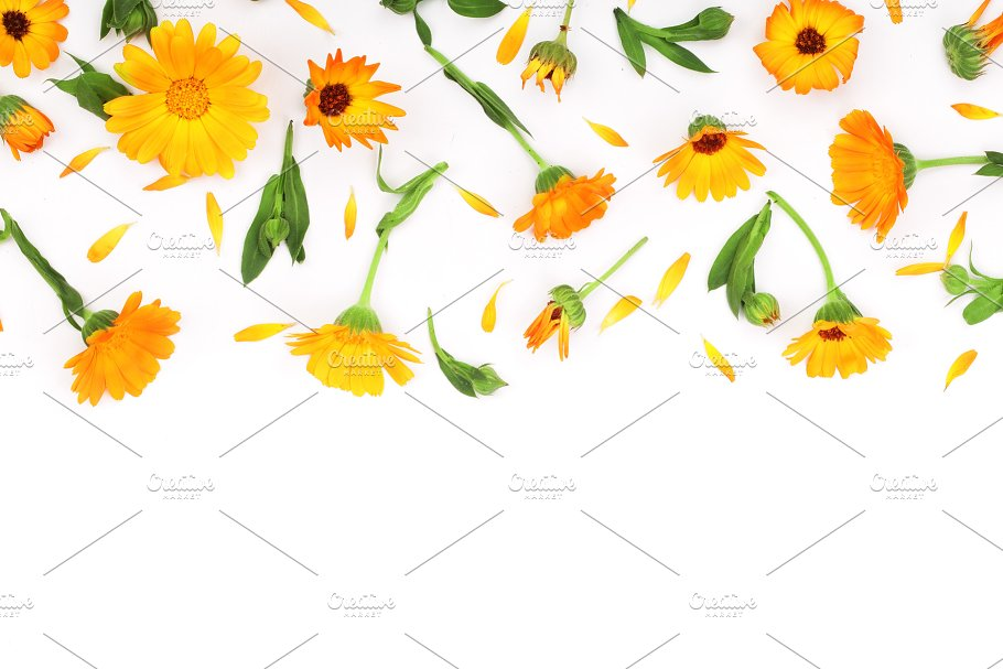 Frame of calendula marigold flower isolated on white background marigold flower isolated on white background corner with copy space for mightylinksfo