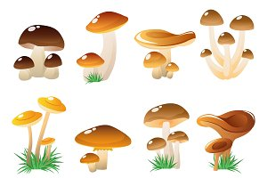 Forest Mushtooms Icon Set
