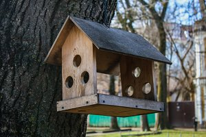 A creative wooden bird feeder in the park.