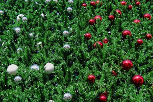 the christmas tree texture with the christmas ball as a background ans wallpaper.