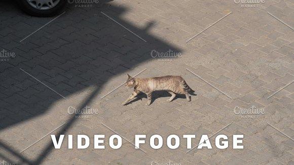 Cat walking on the street, Georgia