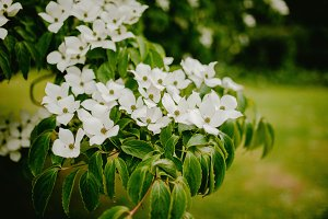 White flowers on green leaves