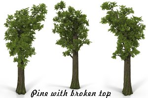 Pine broken top