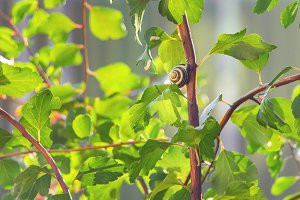 Snail sitting on a tree branch