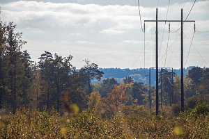 Rural power lines among the forest.