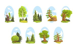 Natural landscape with various trees set. Coniferous and deciduous trees colorful vector Illustrations