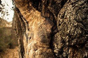 Tree Wood Macro