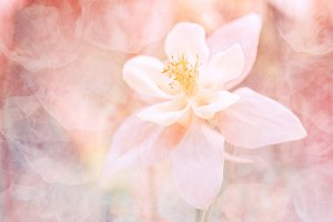 Abstract floral background with a texture. Beautiful pastel shades. soft selective focus