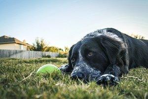 Dog next to ball