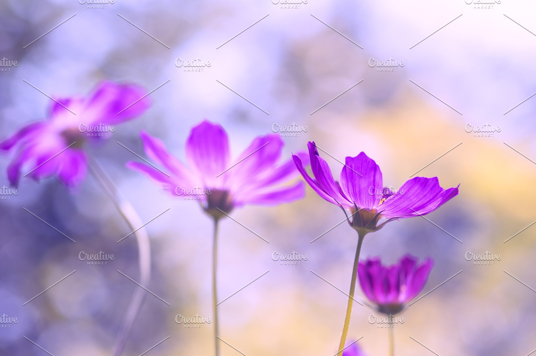 Delicate Purple Flowers On A Beautiful Background Festive Floral
