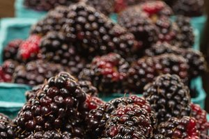 Ripe marionberries
