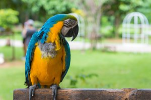 Macaw Parrot standing on tree