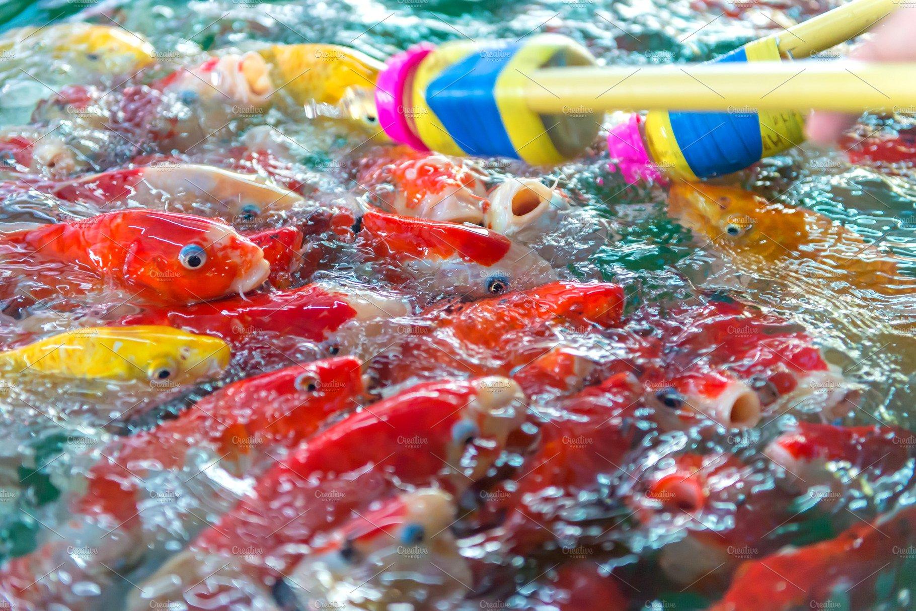 Fancy carp. Many of Japan fish ~ Animal Photos ~ Creative Market