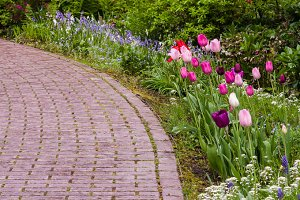 Garden path with tulips