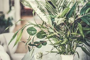 Tropical plant bunch at living room