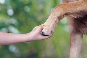 Child's hand and paw of dog