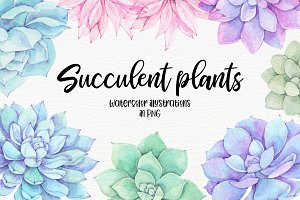 Succulent plants. Watercolor set