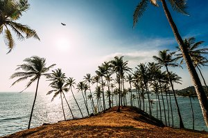Palm grove on the shore of the ocean