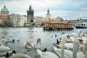 Beautiful Cityscape with Swans