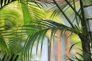 Palm Door, Panama