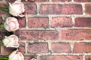 Roses and Brick Background