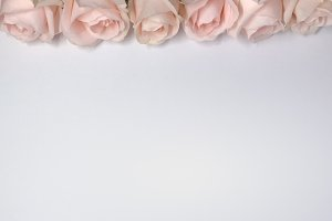 Rose Floral Background Mock Photo