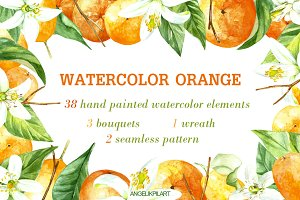 watercolor orange fruit set